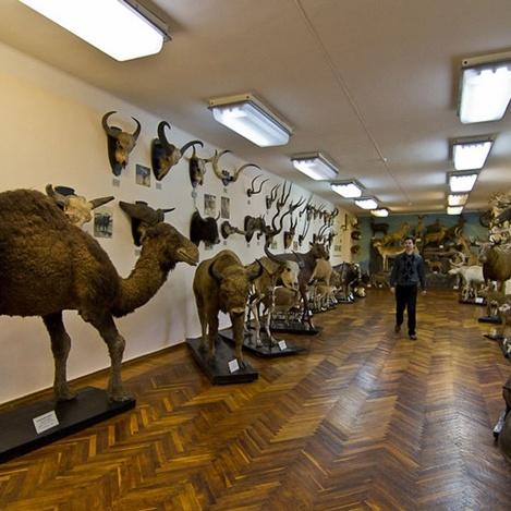 День музеїв 2018: де і як у Києві безкоштовно сходити на екскурсію