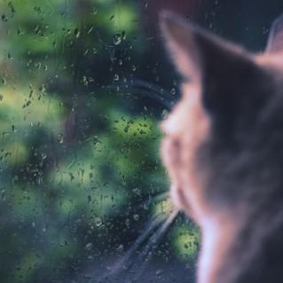 Погода на тиждень: у більшості регіонів України буде без опадів, з четверга почнуться дощі з грозами