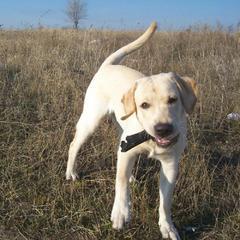 В Україні змінились правила на перевезення домашніх тварин