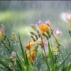 Прогноз погоди на 25 травня: у низці областей України – дощі, проте буде тепло