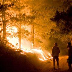 Внаслідок пожежі у лісах Канади, евакуюватися довелося 2 тисячам людей