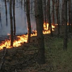 У Швеції потяг зі зламаними гальмами спричинив лісову пожежу