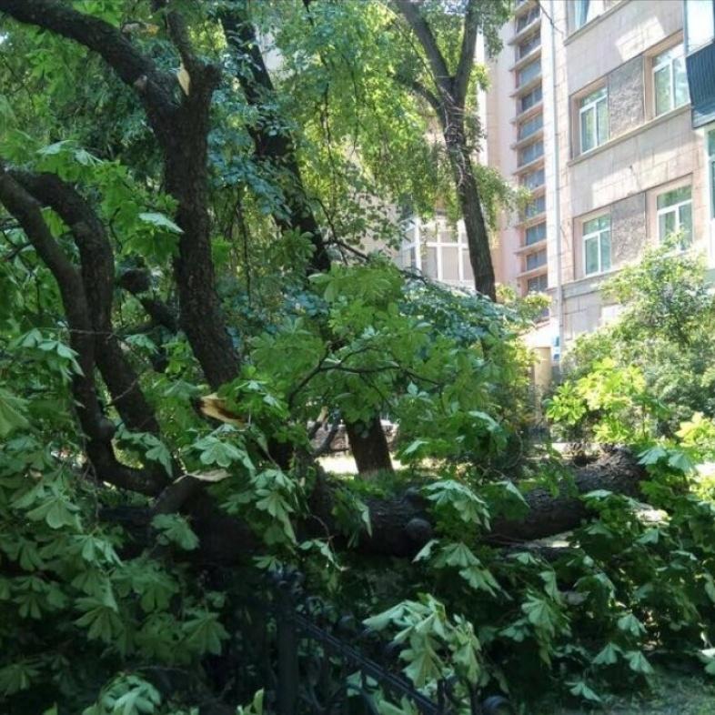 У центрі Києва на припарковані автомобілі впало дерево