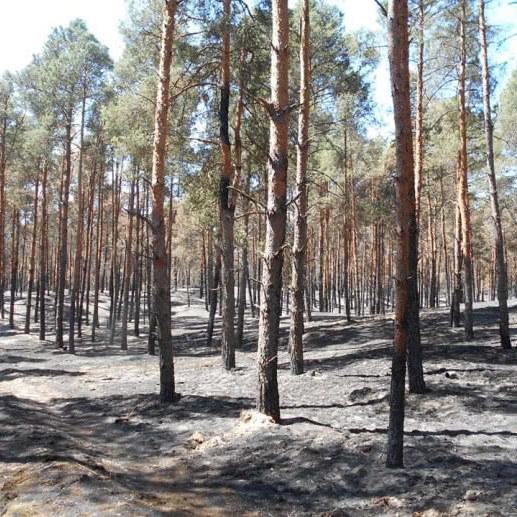 На Херсонщині ліквідували лісову пожежу, що тривала 5 днів (фото)