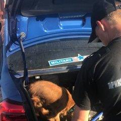 В Одеському порту виявили арсенал набоїв в авто, яке прибуло на теплоході
