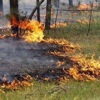 В Україні оголошено найвищий рівень пожежної небезпеки