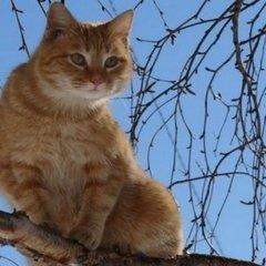На Дніпропетровщині рятувальник потрапив до лікарні після укусу кота