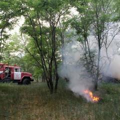Рятувальники локалізували лісову пожежу у Чорнобильській зоні
