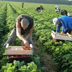 Більшість українських заробітчан не планують лишатися в Польщі