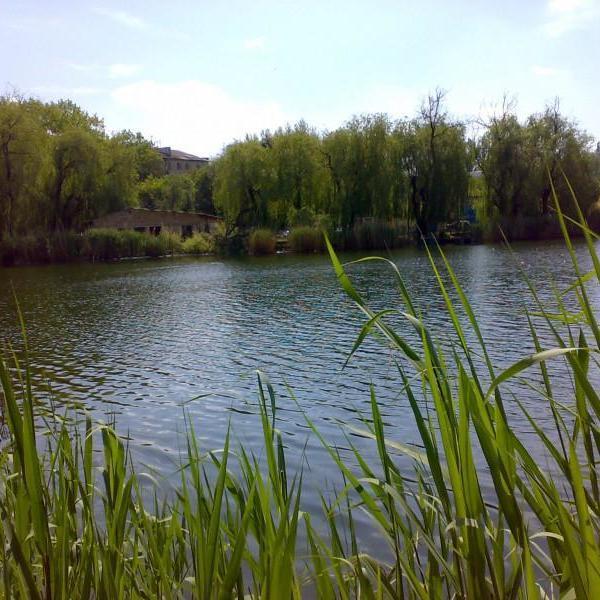 На Рівненщині під час туристичного походу загинула 12-річна школярка