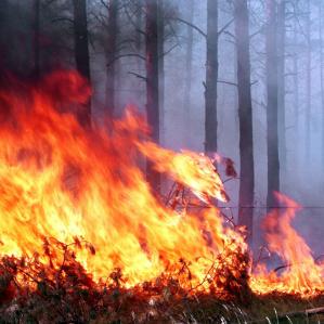У Чорнобильській зоні знову загорілася трава
