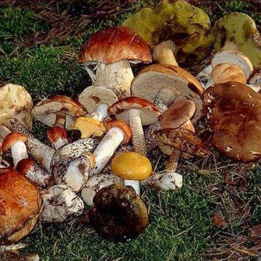 У Дніпрі 7-річна дитина померла від отруєння грибами