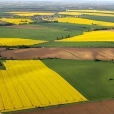 Більшість українців виступають проти скасування мораторію на землю, - дослідження