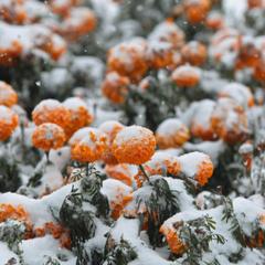 Сьогодні очікується сніг майже по всій Україні