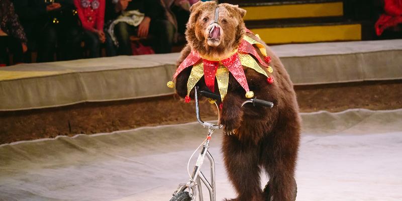 В Україні за п'ять років можуть заборонити диких тварин у цирках