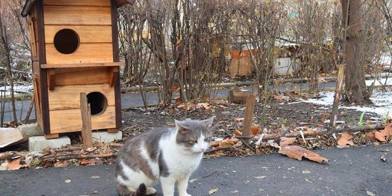 У Чорноморську з'явилися будиночки для котів-безхатченків (фото)