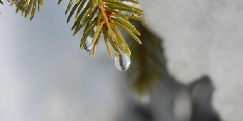 Весняне тепло і дощі: прогноз погоди на 31 січня