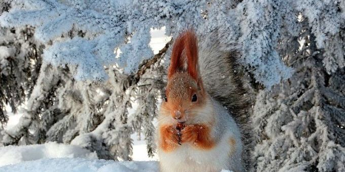 Арктичне повітря принесе до України похолодання