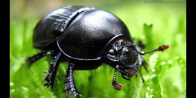40% всіх відомих видів комах знаходяться на межі вимирання