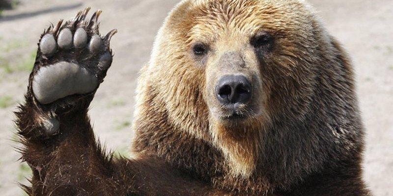 У США пропонують на честь 14 лютого «згодувати колишніх ведмедям»