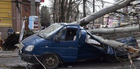 У Миколаєві тополя впала на дорогу і розчавила мікроавтобус