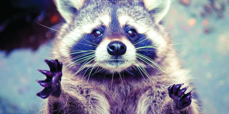 З вини людини до 2070 року можуть зникнути 1700 видів тварин