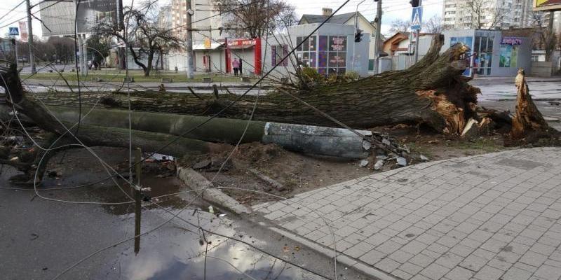 Львовом пронісся шквальний вітер: зірвав дахи, повалив дерева та електричні стовпи (фото)