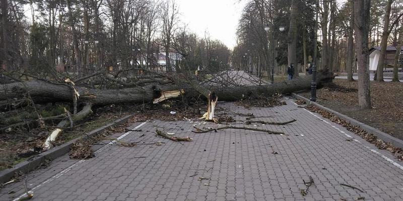Негода в Україні: завтра в Києві очікуються пориви вітру до 20 м/с