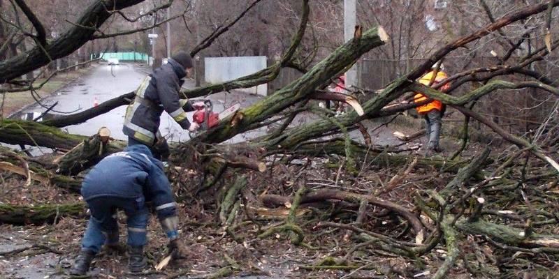 Друга жертва буревію: дерево вбило молоду жінку