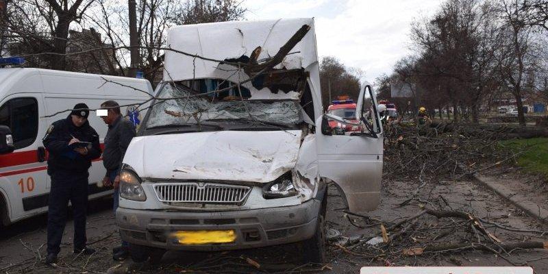 В Миколаєві на маршрутку впало дерево: постраждали діти (відео)