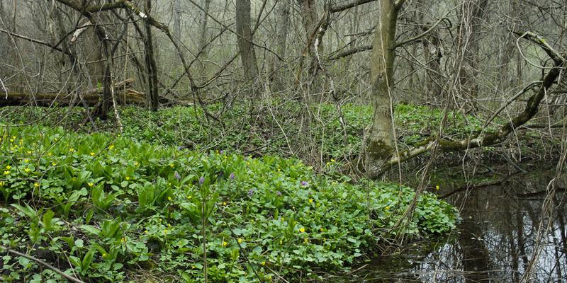На Харківщині в лісі знайшли мертвим військового