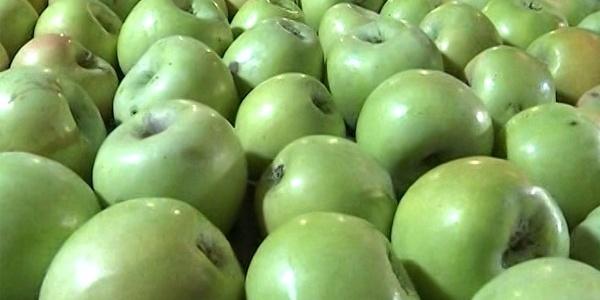 В Україні подорожчають яблука