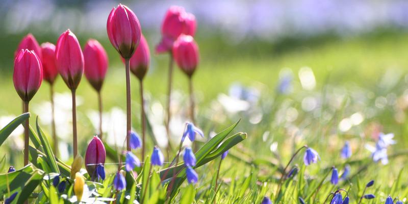 Після холодів буде аномально тепло: свіжий прогноз погоди по Україні до початку літа
