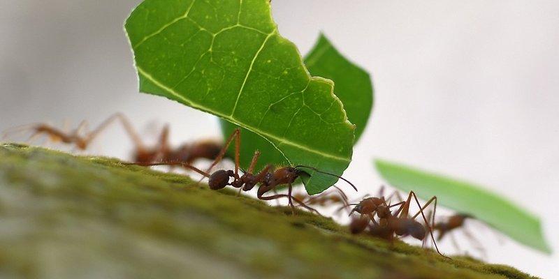 Близько 40% «мурах-трудівниць» просто бігають туди-сюди, не працюючи