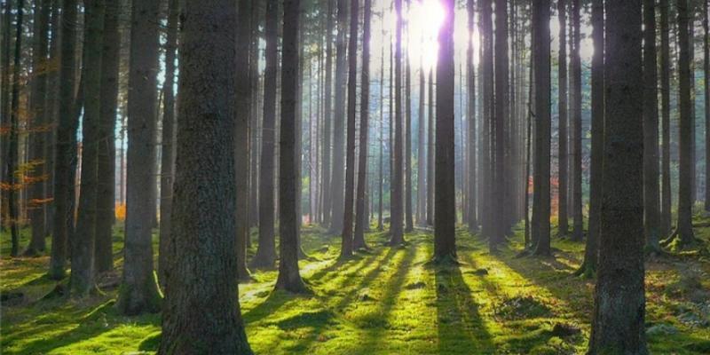 21 березня відзначається Всесвітній день захисту лісів