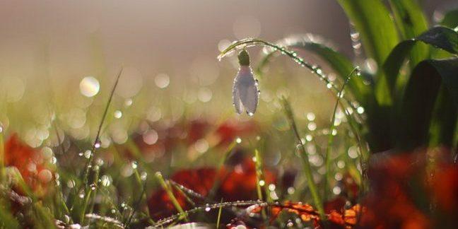 Погода на сьогодні: в Україні місцями пройдуть дощі, температура до +13° (карта)