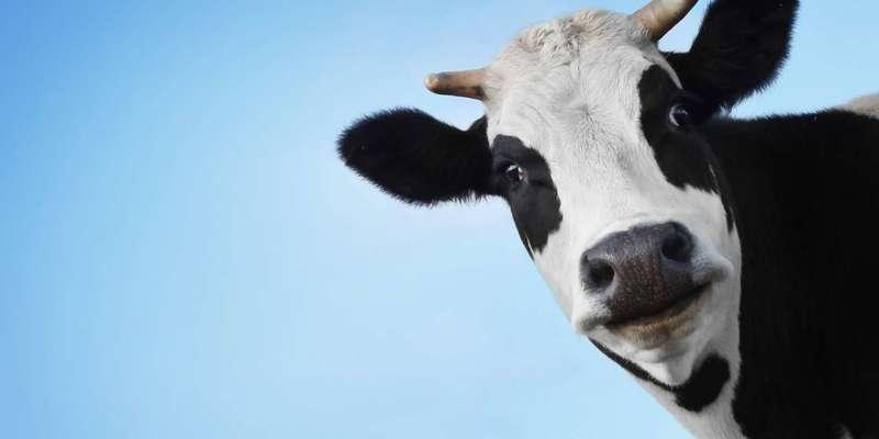 У Білорусі звільнено віце-прем'єра та міністра через «обісраних корів»