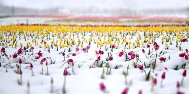 Синоптик прогнозує мінус і навіть мокрий сніг