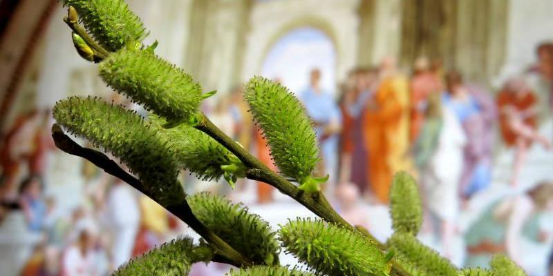 Вербна неділя: традиції свята