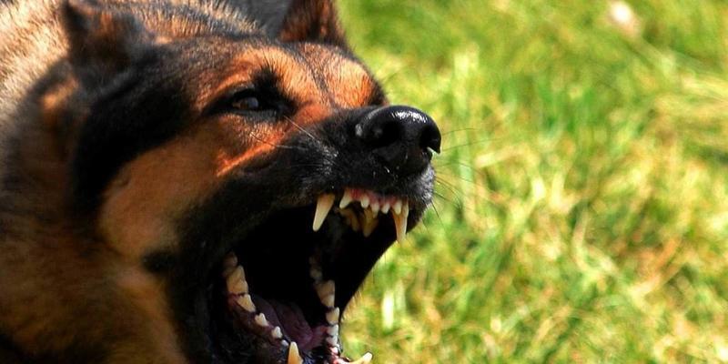 У Бердянську через сказ тварин оголошено карантин