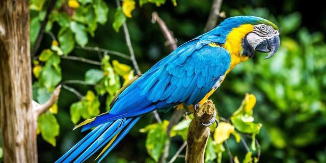 У Бразилії заарештували папугу: він попереджав хазяїв-наркоторговців про наближення поліцейських