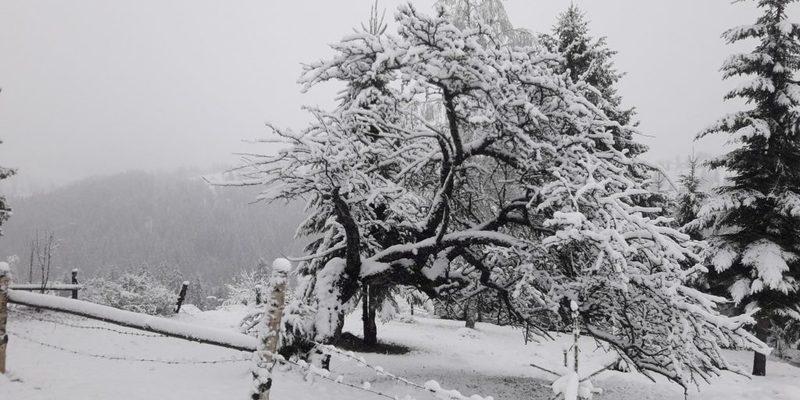 Карпати засипає весняним снігом (фото)