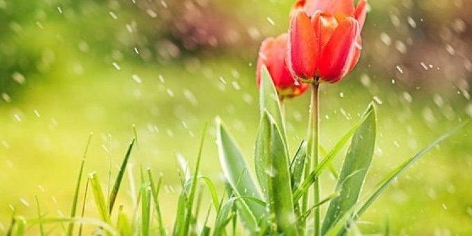 В Україні сьогодні місцями пройдуть дощі, температура до +26° (карта)