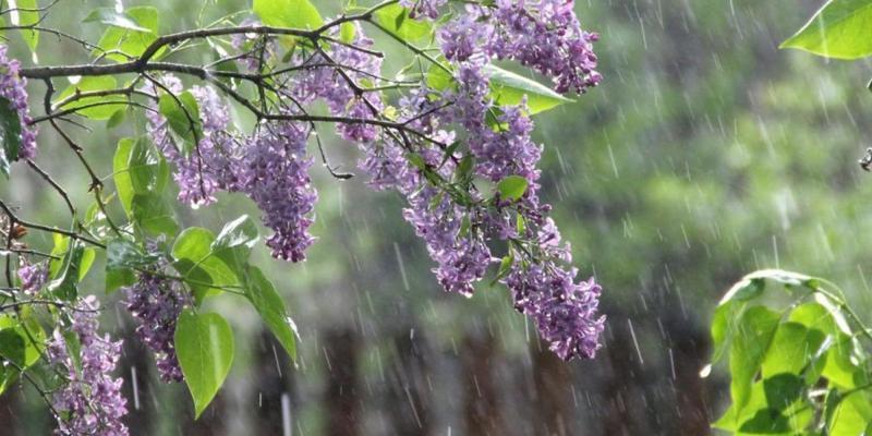 Прогноз погоди на 22 травня: дощі із Заходу йдуть на всю Україну