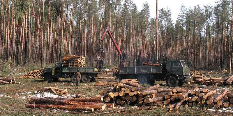 Вирубка лісів на Закарпатті: у Зеленського заявили про намір припинити даний злочин