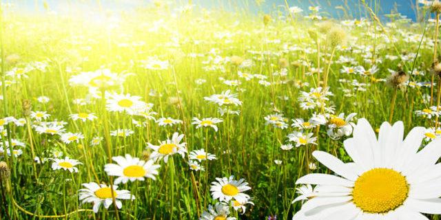Погода на вихідні: в Україні очікуються дощі з грозами і спека до +32
