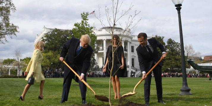 Біля Білого дому загинуло дерево дружби Макрона і Трампа