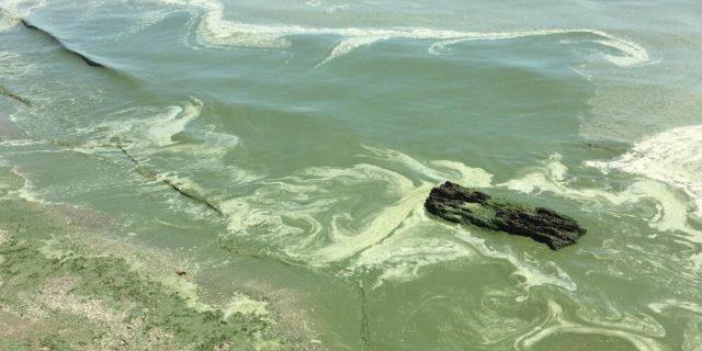 На пляжах Одеси не рекомендують купатися