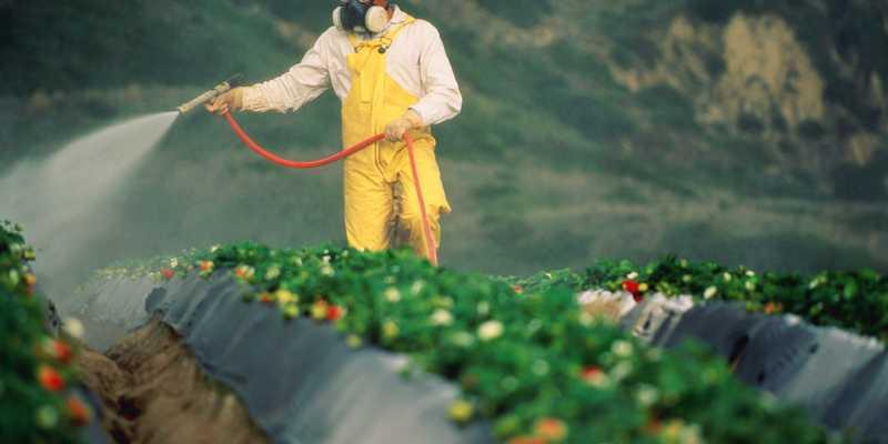 Як харчуватися при небезпеці потрапляння пестицидів в організм: поради лікаря