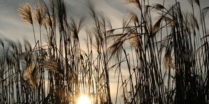 Спека почне спадати в деяких регіонах з вівторка: синоптик дала прогноз на тиждень